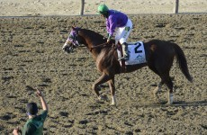 'This is the cowards' way out' - California Chrome's owner was NOT happy at losing the Triple Crown