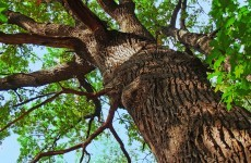 People warned that tall trees may cause 'distress' to neighbours