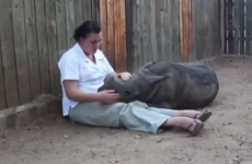 Orphaned baby rhino refuses to sleep alone and will break your heart