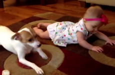 This dog teaching a baby how to crawl is the cutest thing you'll see today