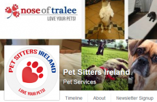There is a 'Nose of Tralee' competition for lovely pets