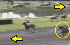 We are highly confident you have never seen a horse race as crazy as this