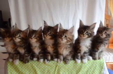Adorable kittens perform perfectly synchronised routine