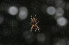 Man tries to kill spider, ends up burning his house down