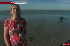 The BBC weather forecast was hilariously videobombed by a weeing dog