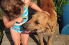 Kid provides hilariously irrefutable evidence that her dog is a girl