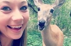19 animals that take way better selfies than you