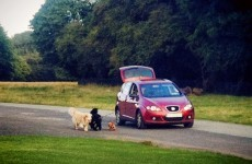 Dublin driver invents a labour-saving way to walk the dog