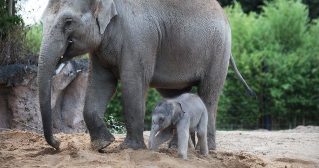 Dublin Zoo's new baby elephant is three days old and unbelievably cute