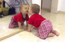 A bunch of babies discover mirrors for the first time, cuteness ensues