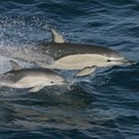 Cut up your six pack rings warns IWDG after dolphin death in Cork