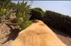 This extremely excited dog running to the beach is you leaving work every day