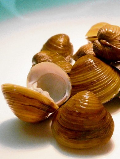 Asian Clam invasion prompts Longford angling ban