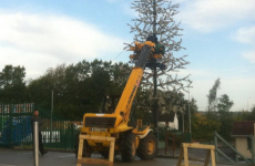 Not to alarm you, but a Christmas tree has been spotted in Cork
