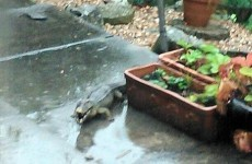 Woman left mortified when 'escaped crocodile' in her garden turns out to be inflatable toy
