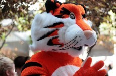 Man cleared of 'extreme porn' charge after 'tiger' revealed to be man in costume