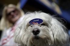 Republicans eye the Senate in close midterm vote