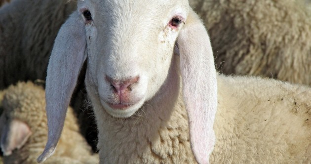 Sheep farmer wins appeal against State over foot and mouth compensation