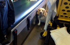 Dog hitches ride on side of ambulance after 85-year-old owner taken ill