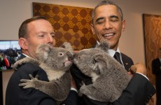 Ah lads, the koala pictures...