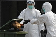 Remember bird flu? It's back and it's in Britain