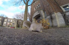 Squirrel steals GoPro, becomes the next Martin Scorsese