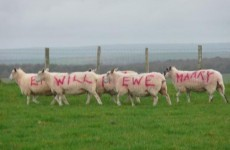 Farmer proposes with sheep, proves to us all that romance isn't dead