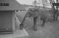 This video showing an elephant throwing rubbish into bin is going viral - but is it real?