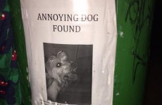 Greatest lost dog ad ever spotted in Phibsboro