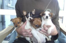 Four pups left for dead saved by jogger on Christmas Day