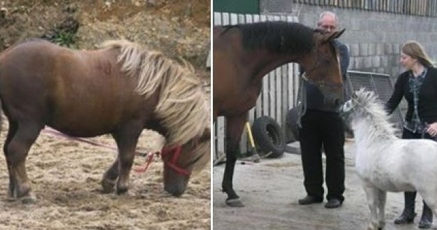 Horse rescue shelter appeals for missing ponies Bam Bam and Tyson to be returned