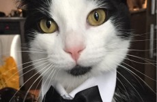 It's National Dress Up Your Pet Day! Here are 10 pets that are doing it right