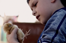 A Belfast film about two boys and their pet chickens took home a Bafta