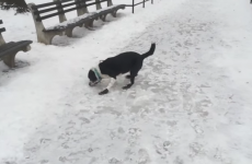 Man laughs at dog slipping on ice, gets instant karma