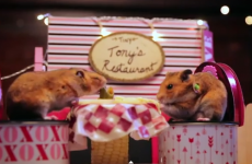 These tiny hamsters on a tiny date just put all your Valentine's plans to shame