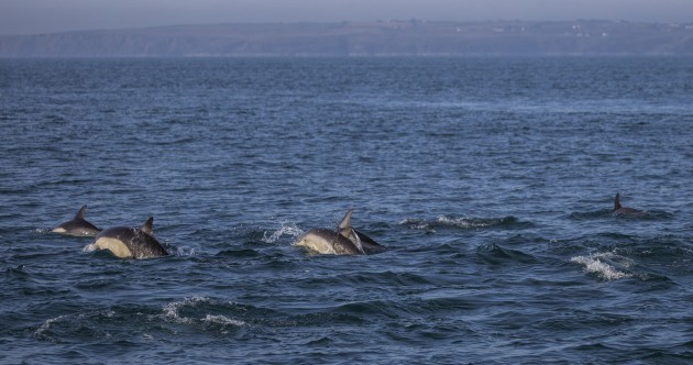 Pics: These cool Hook Head dolphins will (almost) make you want to take a dip