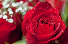 Woman receives Valentines Day flowers from her husband… who passed away last July