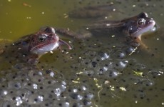 Frogs are spawning all over the place and that means it's OFFICIALLY spring