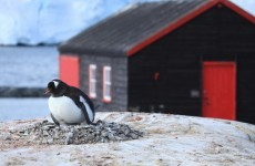 Looking for a summer job? How about working as a postmaster in Antarctica?