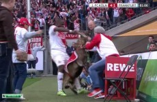 Grabbing a real live goat by the horns is not an appropriate way to celebrate scoring
