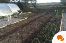 Growing Your Own: It's time to get sowing...