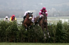 Unlucky photographer gets VERY close to the action at Cheltenham