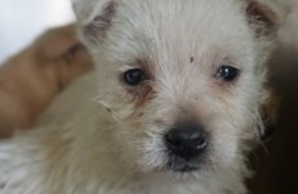 Do you suspect there are puppy farms in your area?