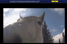 Today FM website and Twitter account have gone berserk with rogue horses
