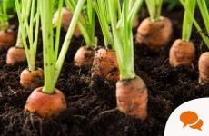 """I wince at the phrase """"green fingers"""" –everyone can grow their own food"""