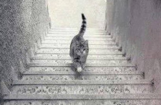 Is this cat going up or down these stairs?