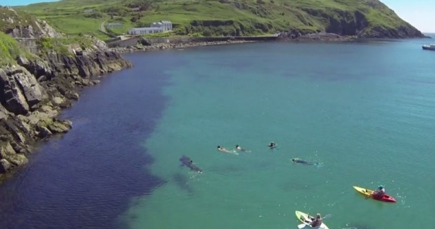 Remember the giant shark spotted in Cork? It's featuring in a new doc