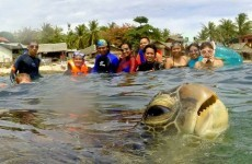 10 of the greatest ever animal photobombs