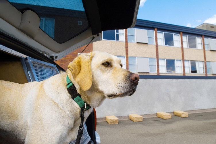 how to get drugs past sniffer dogs