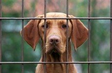 14,559 dogs came into Irish pounds last year, here's what happened the ones in your county